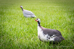 Audubon Swamp Bird_5