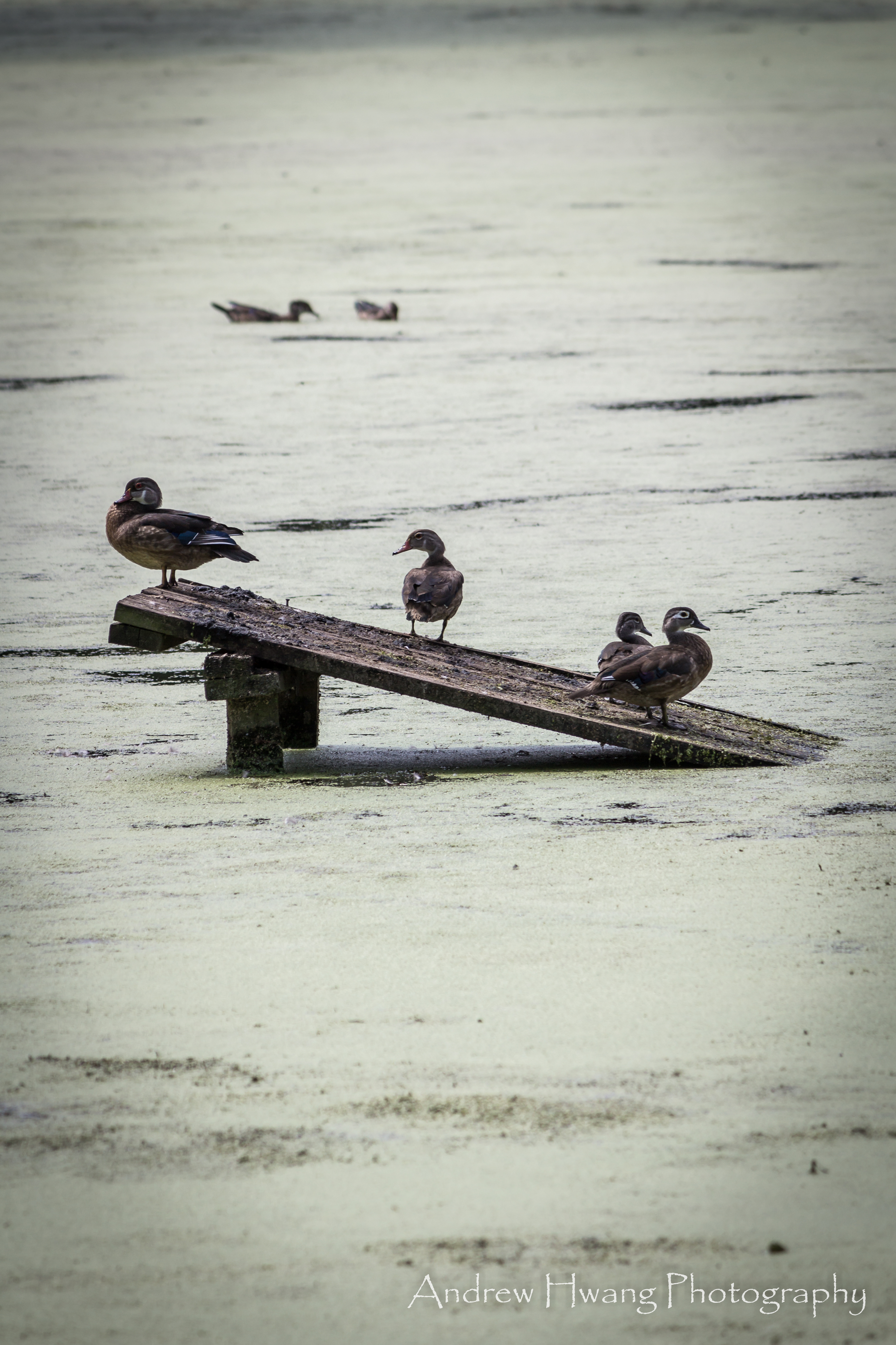 Audubon Swamp Birds