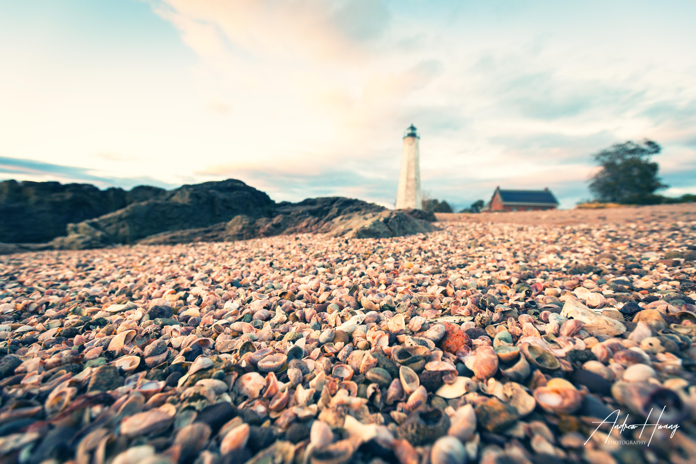 5 Mile Lighthouse Shells