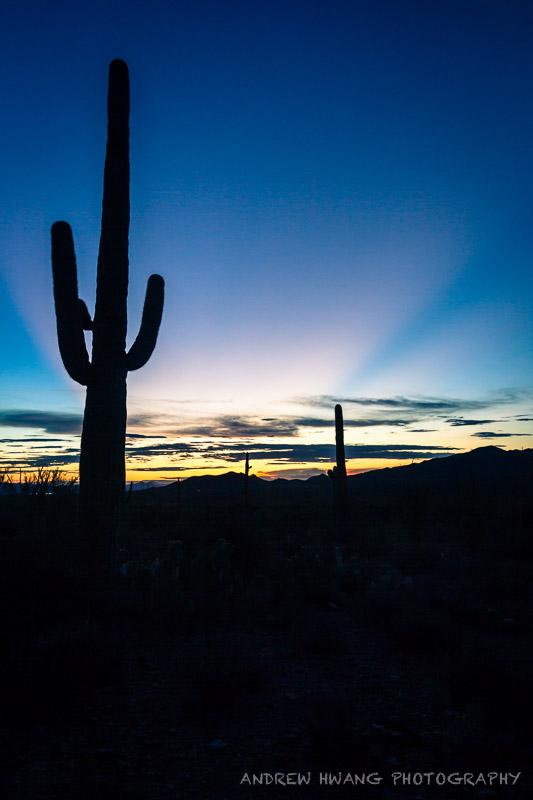 Saguaro Sunrays 2