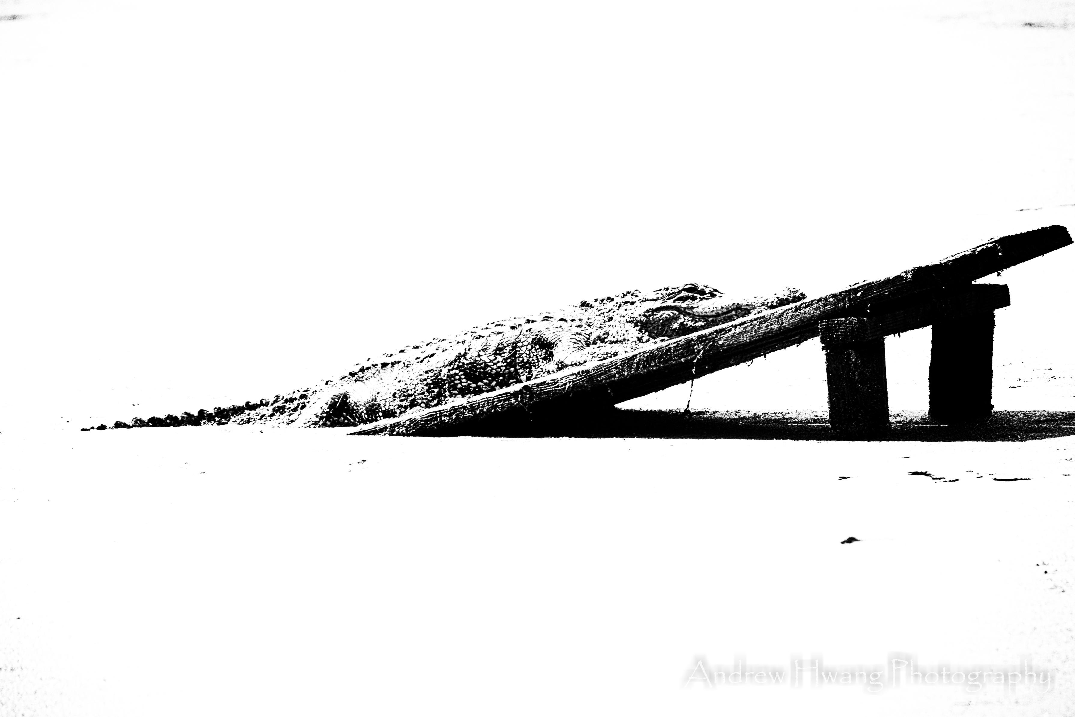 Audubon Swamp Gator B&W