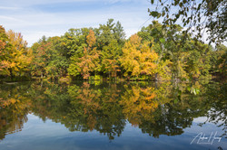 Roger Williams Park Fall Leaves