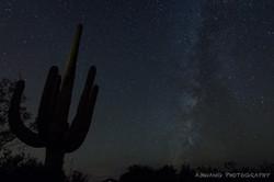 Suguaro Starry Night 3