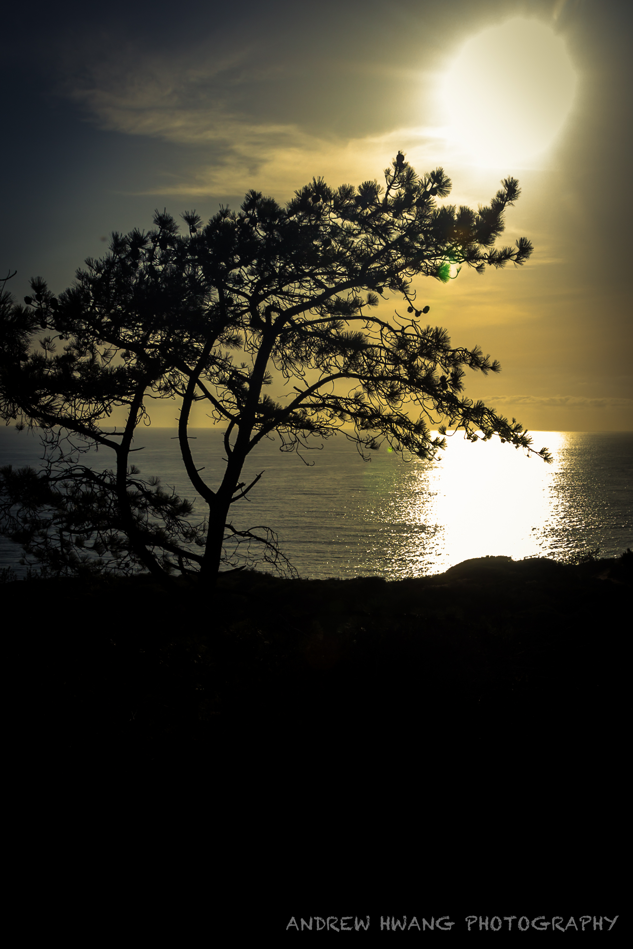 Torrey Pines State Park Silhouette
