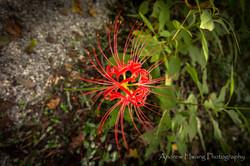 Audubon Swamp Flower_2