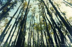 Audubon Swamp Trees_2
