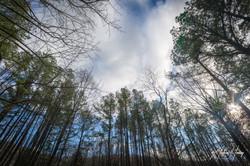 Monticello Trail 2