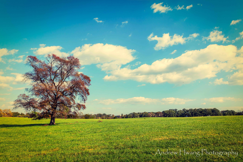 Observatory Tree