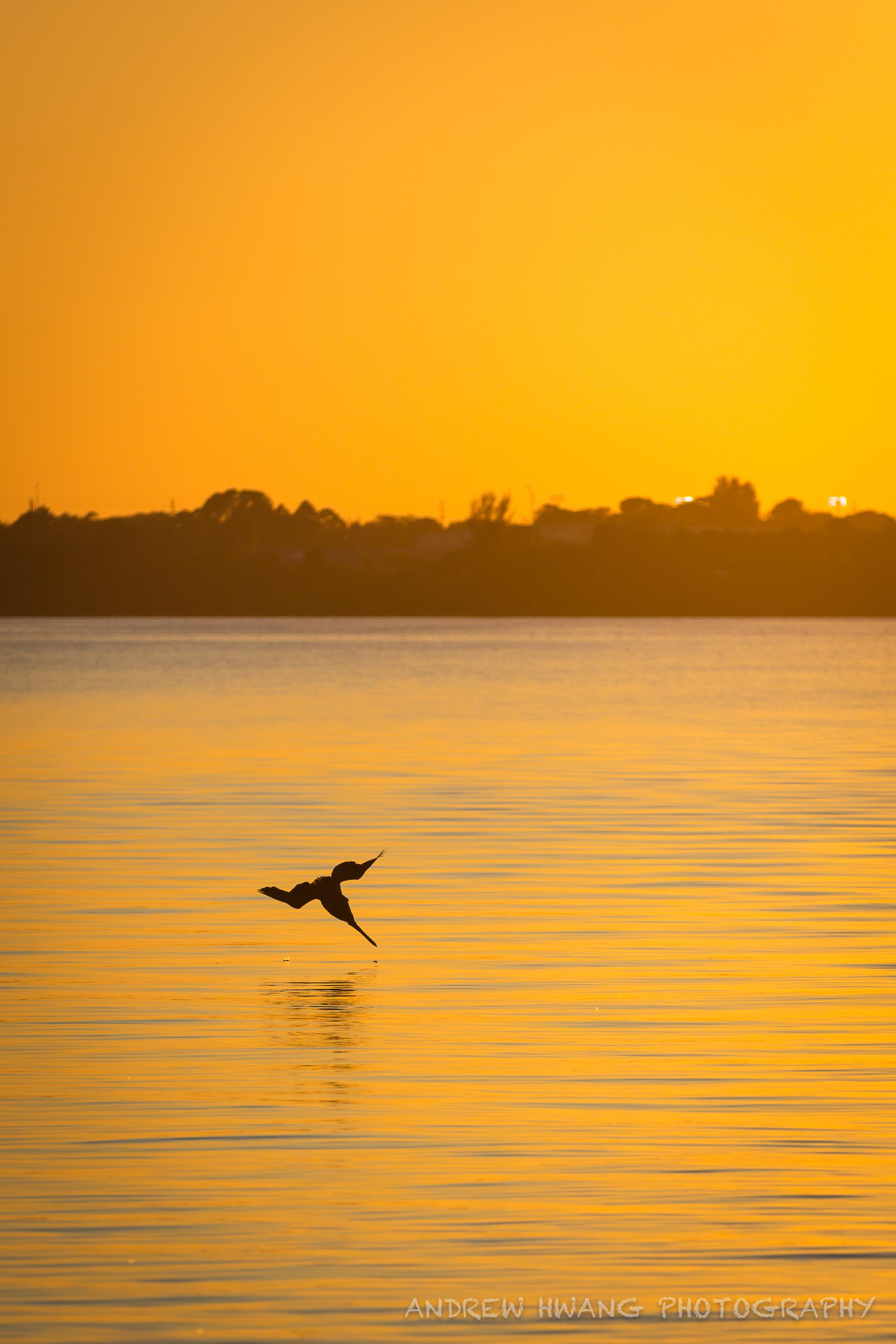 Pelican Sunset 3
