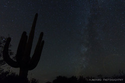 Suguaro Starry Night 2