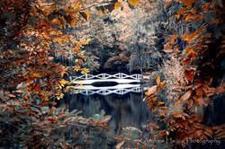 Audubon Swamp Fall Bridge