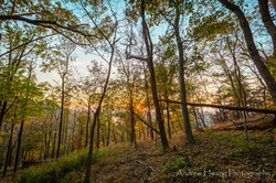 Maryland Heights Overwatch Woods Sunset 2