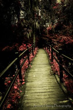 Audubon Swamp Bridge