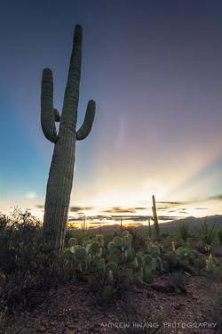 Saguaro Sunrays 3