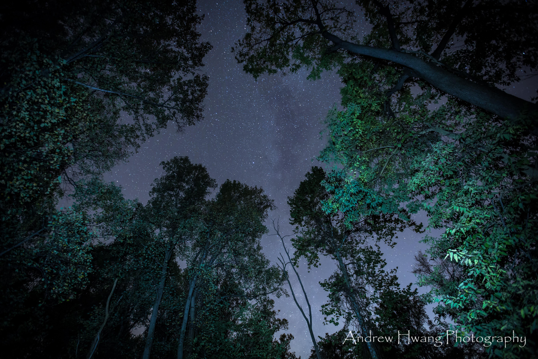 Milkyway Woods