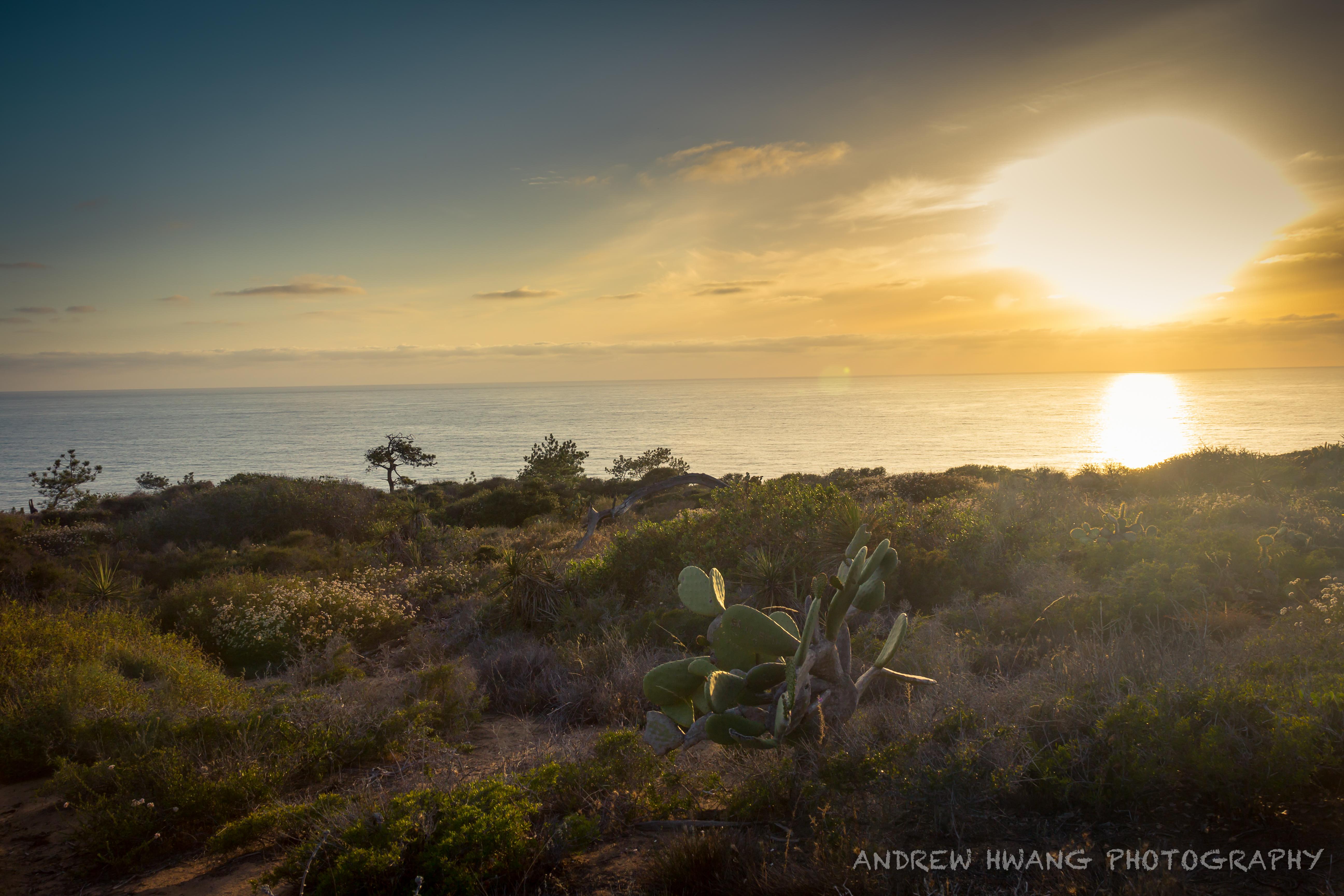 Torrey Pines State Park Sunset
