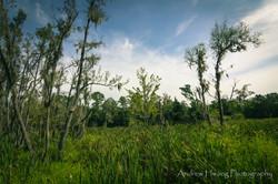 Audubon Swamp Marsh