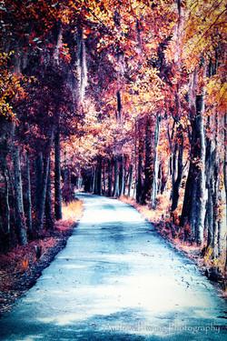 Audubon Swamp Fall Trees_2