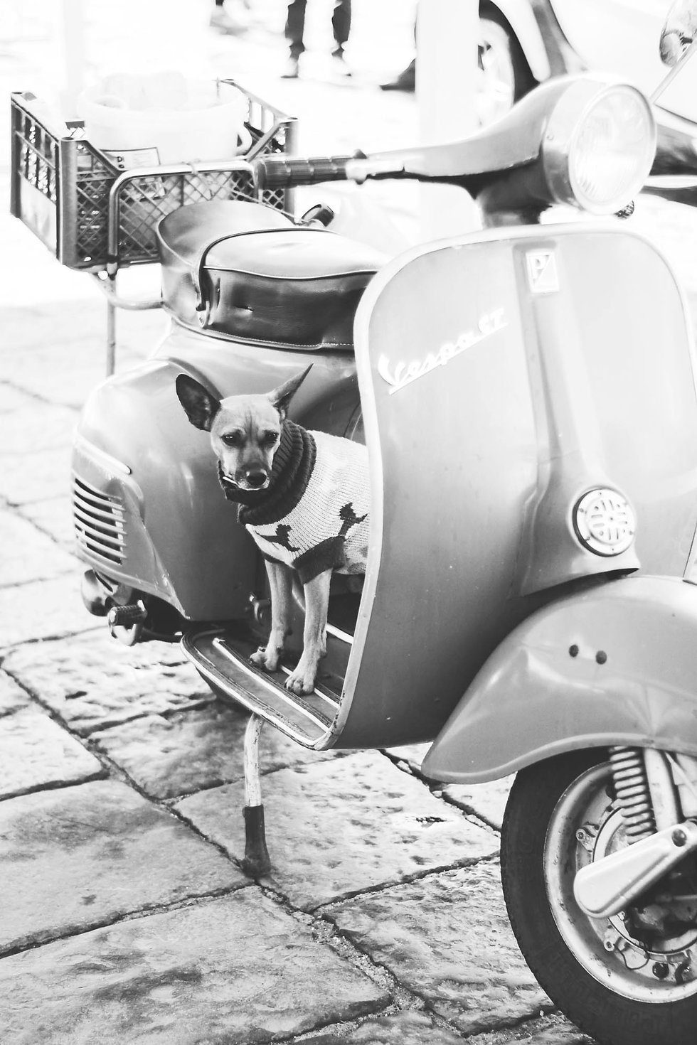 Hund auf alten Vespa auf der Strasse