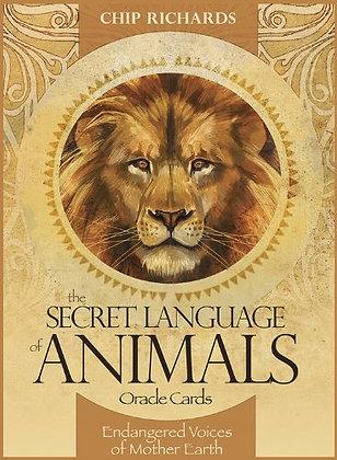 Secret Language of Animals Oracle Cards