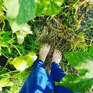 時々裸足で土を踏む
