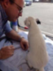Dr Kurmes looking at dog.