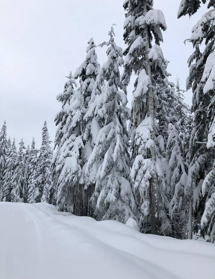 PNW Snow day 2018