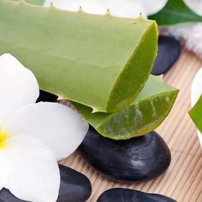 Aloe and your Skin!