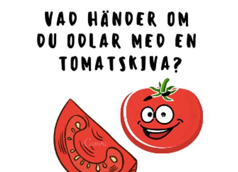 Kan man odla med en tomatskiva?