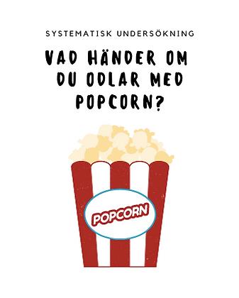 Kan man odla med popcorn?