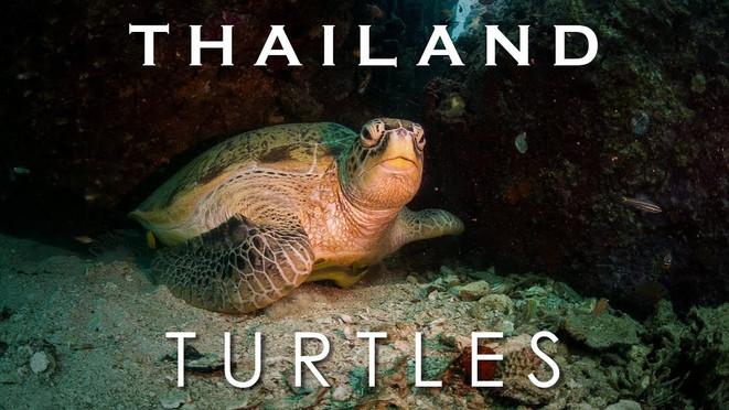 Thailand Turtles