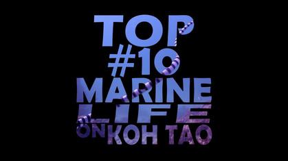 Top #10 Marine Life on Koh Tao