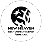 NHRCP | New Heaven Reef Conservation Program | Aquatic Images | Selected Client