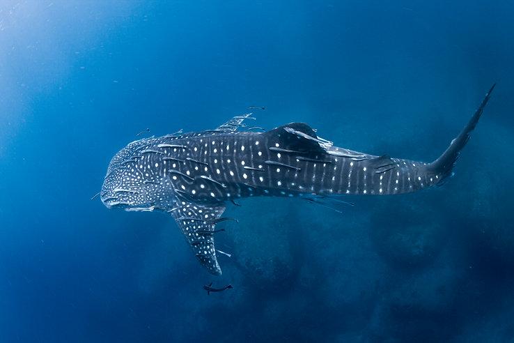 Dive school promotion videos | Aquatic Images
