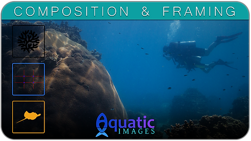 Composition & Framing Course in Koh Tao - Thailand | Aquatic Images