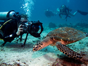 5 beginner tips for Underwater Videography [Things I wish I knew 10 years ago]