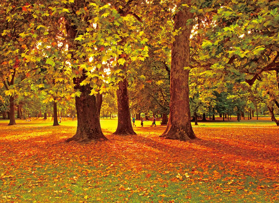 校园周边的森林