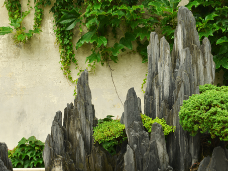 A Brief History Of Bonsai