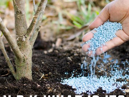 Bonsai Fertiliser NPK Explained