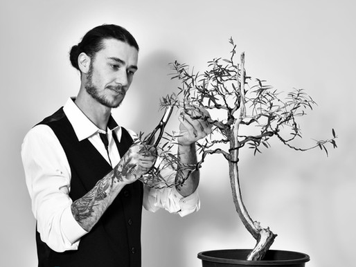 The 5 Best Techniques For Bonsai Beginners To Learn