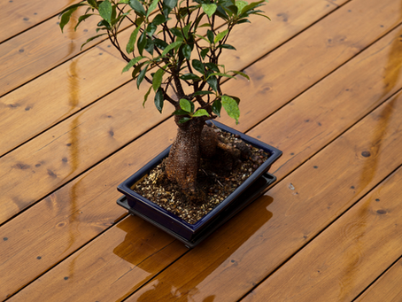 It Rained Today, But You Might Still Need To Water Your Bonsai.