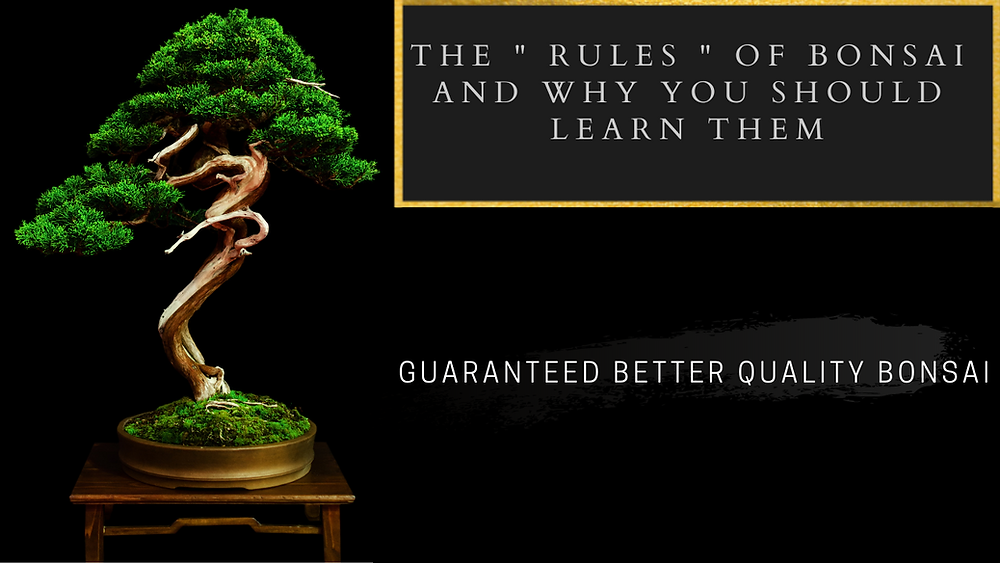 The Rules Of Bonsai