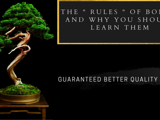 """The """"Rules"""" Of Bonsai - Lets Call Them Guidlines"""
