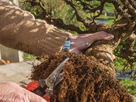 Understanding the Differences Between Repotting, Slip Potting And Potting For The First Time.