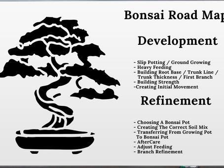 Detailed Road Map To Creating Proper Bonsai