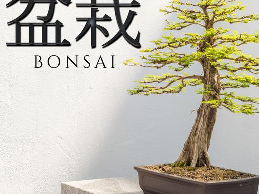 Understanding The Bonsai Language