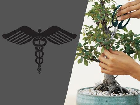The Care Of Sick Bonsai