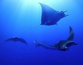 Scuba Diving Dive Azores Tauchen Ploonge Mergulho Buceo