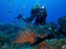 Scuba Diving Azores Dive Ponta Delgada Tauchen Plongée Buceo Mergulho