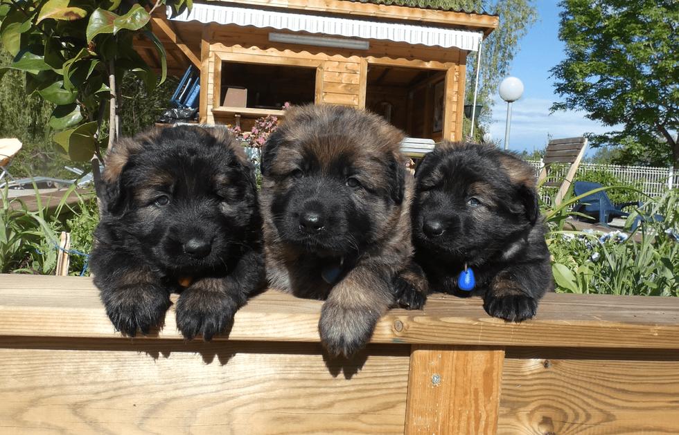 la triplette a 4 semaines